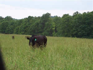 Missouri Grass Fed Beef First-Time Customer Center