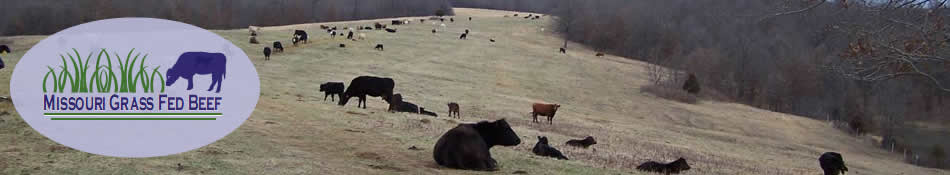 Missouri Grass Fed Beef